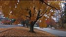 Осень   Fall