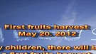 First fruits harvest – May 20. 2012