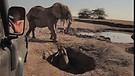Amazing Baby Elephant Rescue + Emotional Reunion...