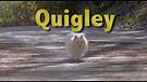 Quigley / Trailer