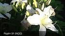 Vlog 160- Psalm 91 (Unter Gottes Schutz)
