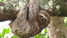 Overcoming the spirit of SLOTH