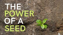 The Power Of A Seed - Part 3