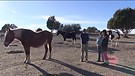 Heroes & Horses - Prescott's Animal Corner - Epi...